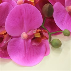 Best collection-орхидея 25.5 REAL TOUCH PHALAENOPSIS SPRAY×5FLWS, 65 см.