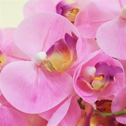 Best collection-орхидея 26.5 REAL TOUCH PHALAENOPSIS SPRAY×5FLWS AND 1 BUD, 69 см.
