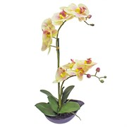 Орхидея в кашпо 20.5 REAL TOUCH PHALAENOPSIS SPRAY X2 15010324/PK01001