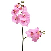 Best collection-орхидея 33 REAL TOUCH PHALAENOPSIS SPRAY×2, 85 см.